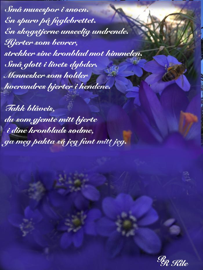 Dikt, gjennom livets krumspring,  poesi,  gjennom sinna sjø og buketter med roser, poem, sjøen går hvit i fjorden, lyrikk, i dine kronblads sødme, forfatter R.R. Kile