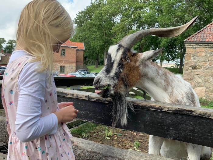 Seksåringer, Utvikling av tenkningen, lekens betydning, flyt i læring, lek er flyt,  Undervisning, Mihaly Csikszentmihalyi, Forfatter R.R. Kile