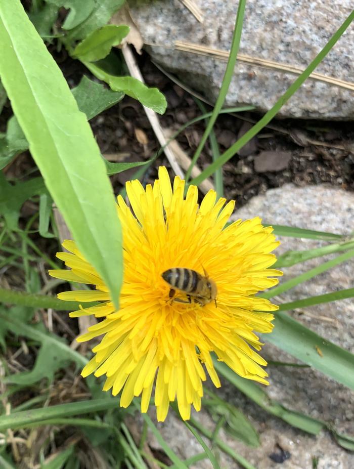 Poesi, vers, dikt, ordlek, gøy med ord, lyrikk, ei sol for alle, magiske gleder, løvetannbarn med bier på. Forfatter R.R. Kile.