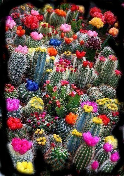 Vers, å drømme fremtid i en kaktus, to mennesker med en regnbue mellom seg, å danse vannperler sammen, tenk for en vrimmel av døde som hviler gjennom årtuseners gang, de spor som aldri ble tråkket, poesi, forfatter R.R. Kile.