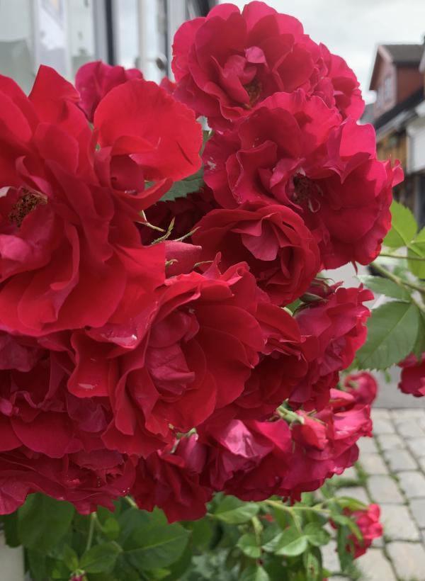 lyrikk, flammende kyss til ro i en uværsnatt, ser på gamle blomstervanger, to mennesker med en regnbue mellom seg, å danse vannperler sammen, tenk for en vrimmel av døde som hviler gjennom årtuseners gang, de spor som aldri ble tråkket, poesi, forfatter R.R. Kile.