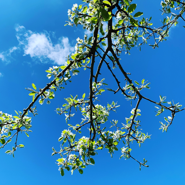lyrikk, om våren eksploderer livet, ser på gamle blomstervanger, to mennesker med en regnbue mellom seg, å danse vannperler sammen, tenk for en vrimmel av døde som hviler gjennom årtuseners gang, de spor som aldri ble tråkket, poesi, forfatter R.R. Kile.