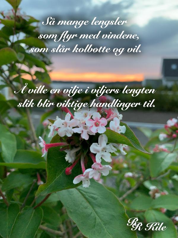 Så mange lengsler som flyr med vindene,  å holde ungen mot brystet, der livet flør, dypt der inne i stammen, på ei gjørmekake i ei barnehand,  knopper i isglede, poesi, lyrikk, Forfatter R.R. Kile.