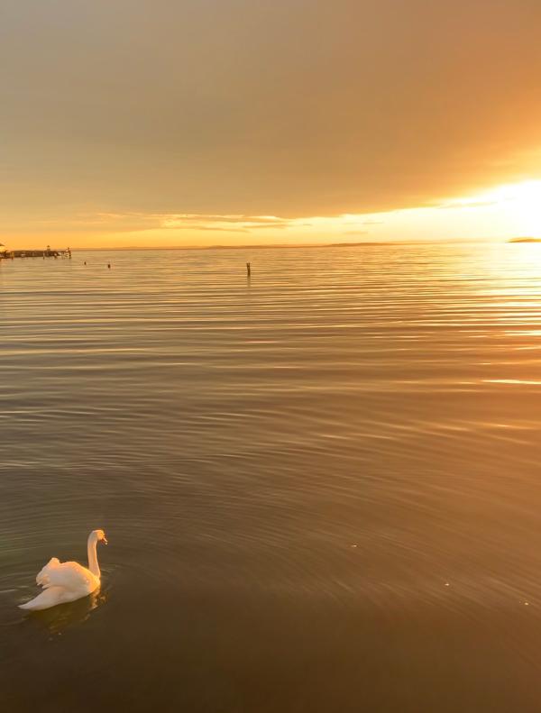 På det stille vann, glir en enslig svane, finnes det varme i en istapp, tårer av is, denne kjærligheten, så vanskelig å forstå, som verdens folk kan gneldre eldre når de burde elske, vers, lyrikk, forfatter R.R. Kile